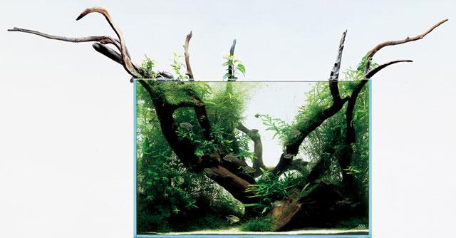 MIZUBE 90x45x60H. © Aqua Design Amano