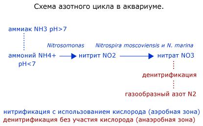 Схема азотного цикла. Рисунок: © 2005 Ian Luna.