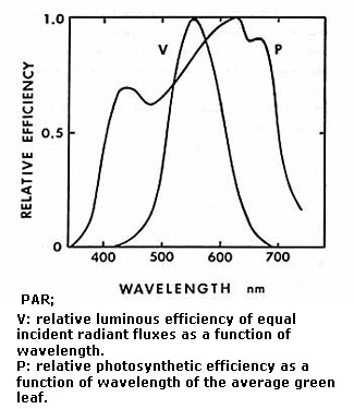 from: A rational approach to light measurements in plant ecology, K. J. McCree