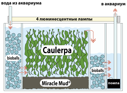 Как сделать самп в морской аквариум - Твой рабочий стол