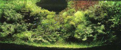 IAPLC 2002 - место 8