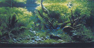 IAPLC 2003 - место 1