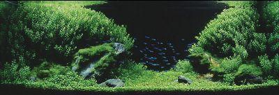 IAPLC 2004 - место 6
