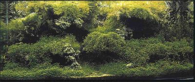 IAPLC 2005 - место 25